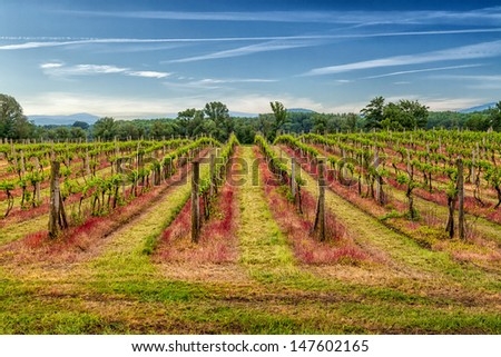 Pathway to vineyard  in beautiful landscape scenery.