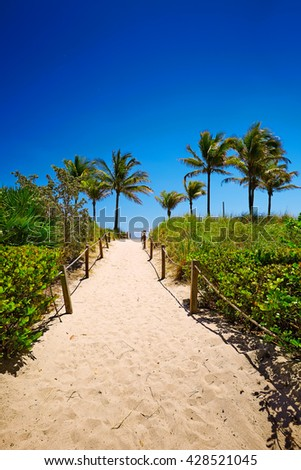 Pathway with coconut palm to the beach in Miami Beach, USA. - stock photo