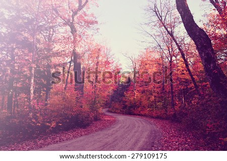 Pathway with overarching fall coloured trees - stock photo