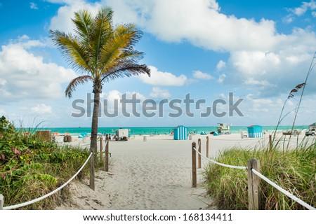 Pathway with palm tree to Miami Beach. - stock photo