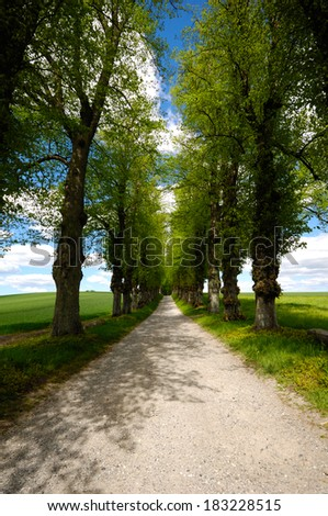 Pathway with trees on boath sides. Taken at summer time. - stock photo