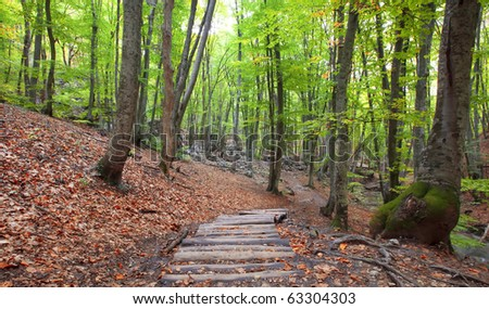 Pathway wooden stairs in summer green mountain forest - stock photo