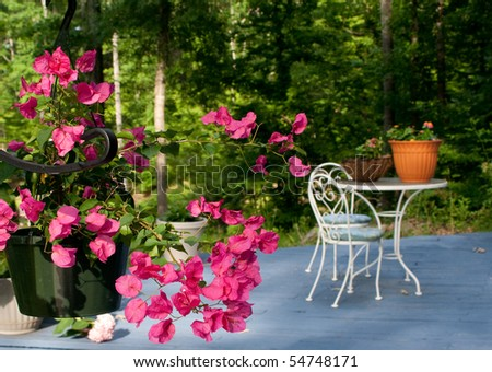 Patio flowers - stock photo