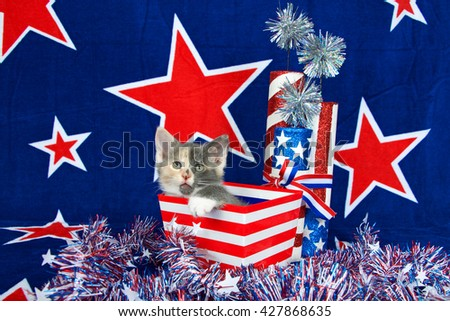 Patriotic calico kitten, blue background with red stars outlined in white, kitten sitting in red and white stripped box tinsel with white stars on table in front of her. - stock photo