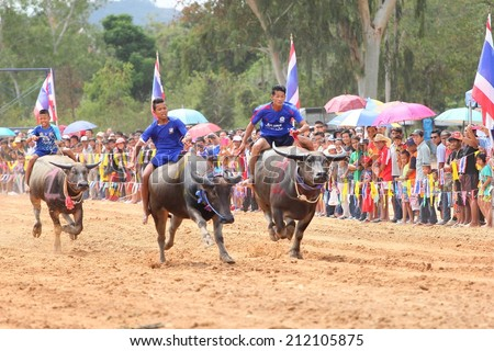 PATTAYA - AUGUST 17: Participant at the Buffalo Racing Festival of Nong Prue City at Mab Prachan Reservoir in Pattaya, Thailand on August 17, 2014.  - stock photo