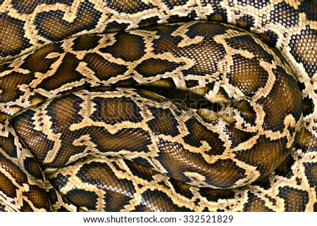 Pattern Boa Snake skin abstract textured