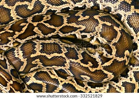 Pattern Boa Snake skin abstract textured  - stock photo