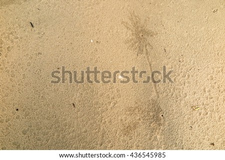 Pattern developed of small crabs holes on beach sand, house of crab. - stock photo