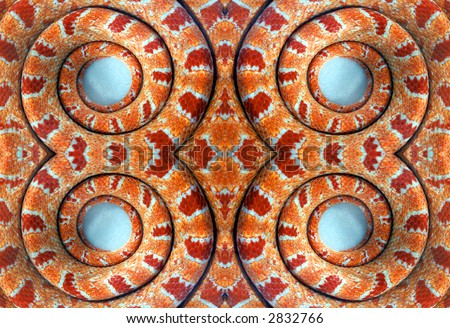 Pattern from coils of a corn snake