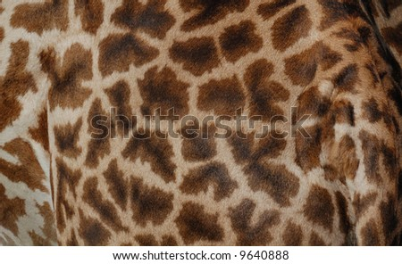 pattern of a giraffe