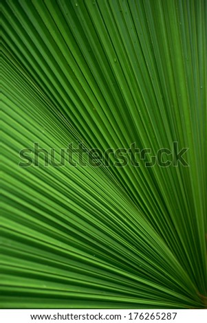 Pattern of a large palm leaf.
