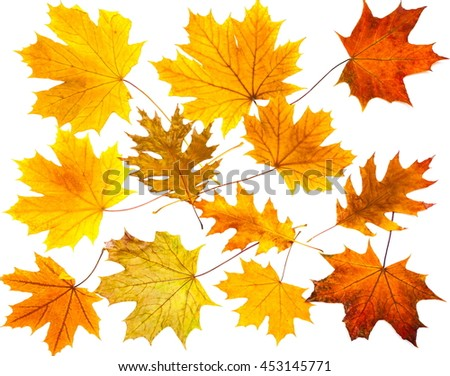 Pattern of autumn colorful leaves, yellow leaves, white background, lay flat, the top view