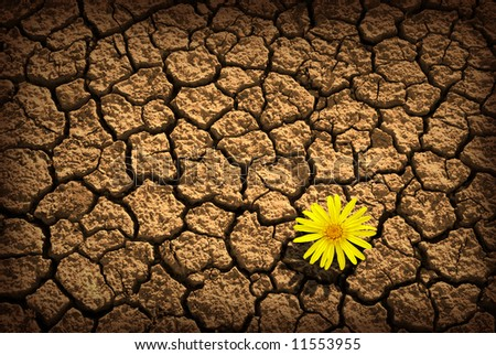 Pattern of cracked and dried soil With a single flower - stock photo