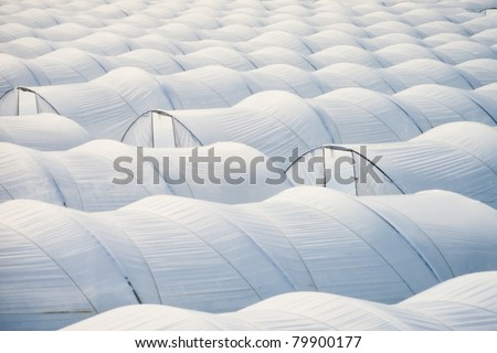 Pattern of endless sea of plastic horticulture greenhouse tunnels for intensive farming of vegetables. - stock photo