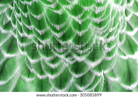 Pattern of feather, Closeup feather - stock photo