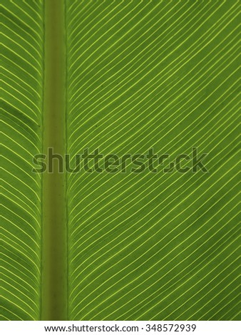 Pattern of green leaf - stock photo