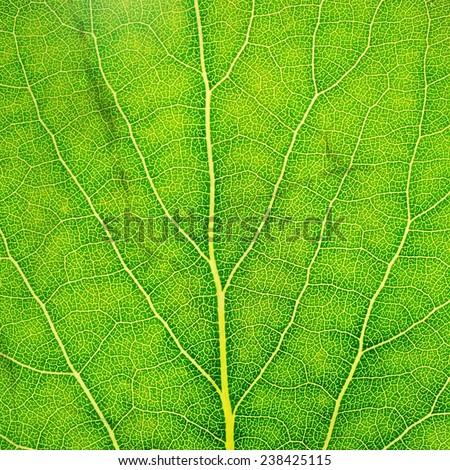Pattern of green leaf texture - stock photo