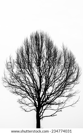 Pattern of leafless tropical tree - stock photo