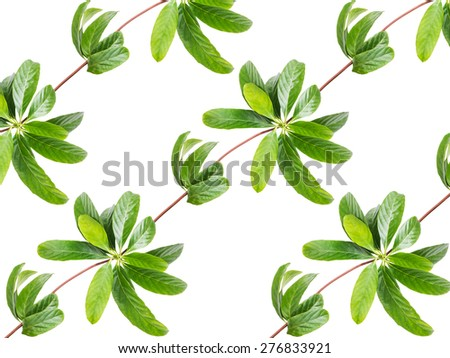 pattern of leaves creeper plant isolated on white background - stock photo
