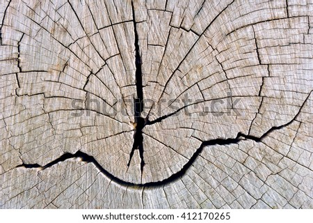 Pattern of tree trunk. - stock photo