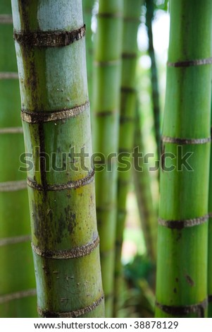 Pattern of vertical green bamboo stems. - stock photo