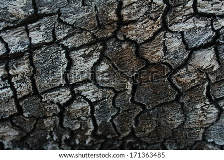 pattern texture on the burnt timber - stock photo