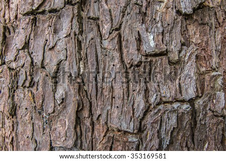 Patterned bark on the trunk is large. - stock photo