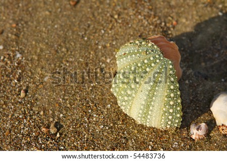 Patterned green sea urchin shell sits on beach