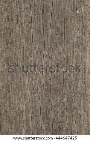 patterned tree,patterned wood