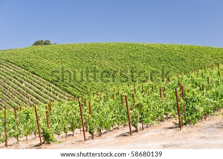 Patterns of a hillside vineyard in California - stock photo