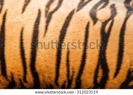 Patterns of tiger skins - stock photo