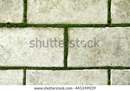paving slabs covered with moss - stock photo