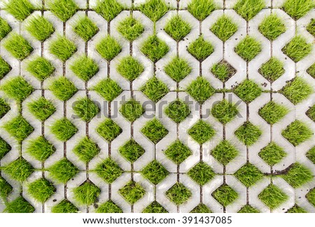 Paving-stone in a lattice shape and green grass in the holes - stock photo