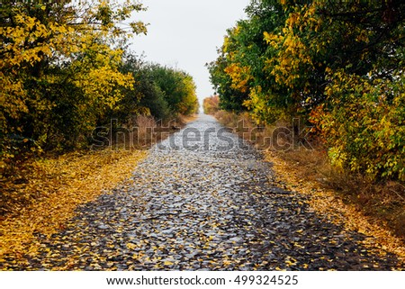 Paving stone old road in autumn forest. Yellow, green fall colorful trees. Beautiful vintage trail through autumnal park. Nature view with fallen leaves along alley. Outdoor and travel landscape.