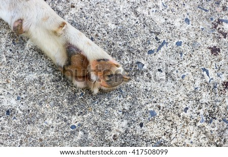 Paw , dog feet and legs - stock photo