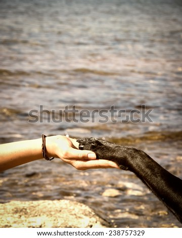 paw in hand  human hand and dog paw - stock photo