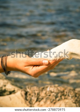 paw in hand , human hand and dog paw - stock photo