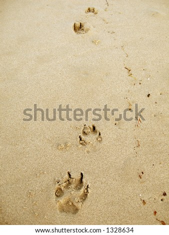 Paw prints of a dog at the beach.
