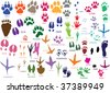 paw prints of animals and birds - stock vector