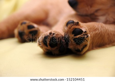 Paws of sleeping puppy - stock photo