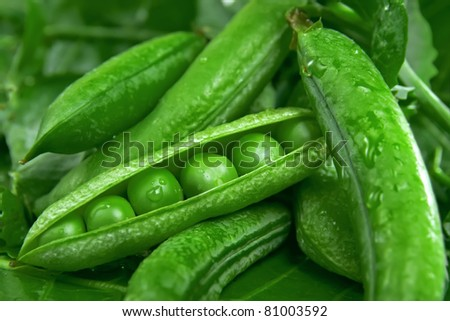 Pea in the pod - stock photo