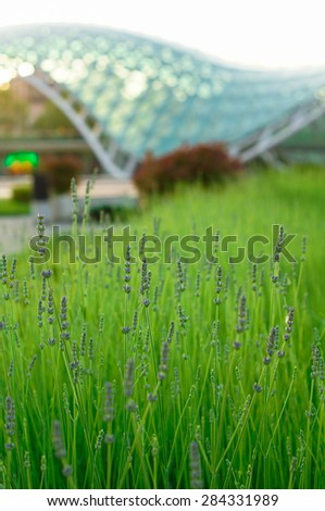 Peace bridge in Old Tbilisi and lavender field, Georgia, Caucasus area - stock photo