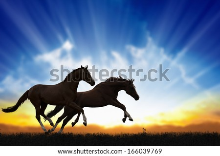 Peaceful background - two running horses, beautiful sunset, picture for chinese year of horse 2014 - stock photo