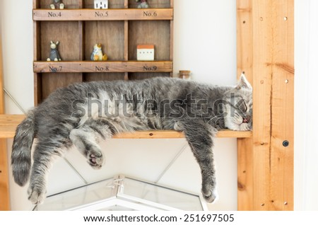Peaceful gray tabby cat curled up sleeping in the house, on bed - stock photo