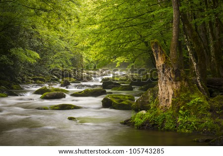 Peaceful Great Smoky Mountains National Park foggy Tremont River relaxing nature landscape scenics near Gatlinburg TN - stock photo