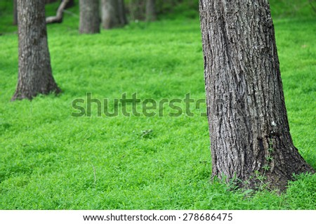 Peaceful green forest floor - stock photo