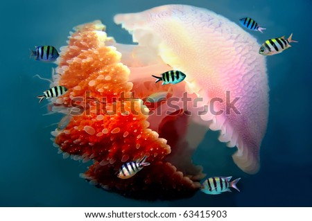 Peaceful image of a mosaic jellyfish - stock photo