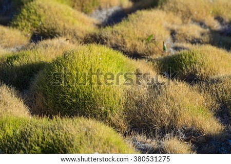 Peaceful mounds of green garden Korean grass brings tranquil feelings. - stock photo