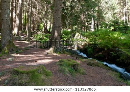 Peaceful mountain stream flows through lush forest - stock photo