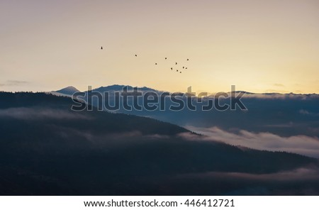 Peaceful nature before sunrise - stock photo